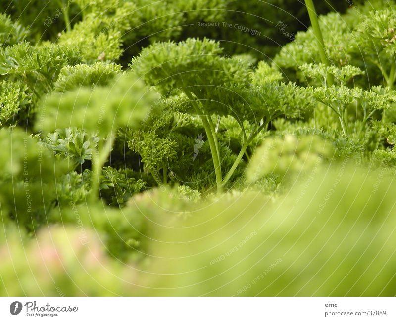 nitrous Green Macro (Extreme close-up) Close-up Nature Lettuce eat healthily