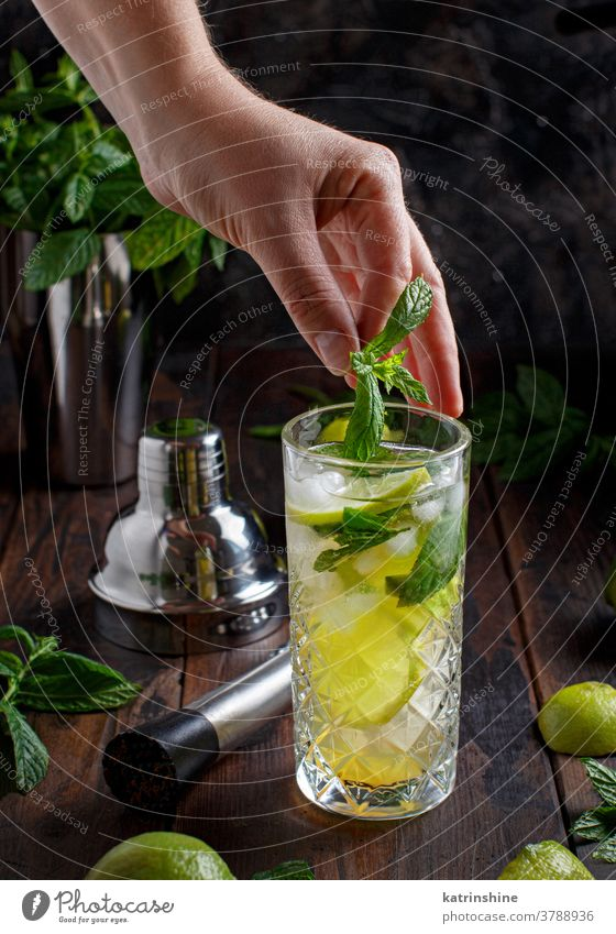 Hands adding fresh mint in glass with Mojito cocktail mojito mocktail hands faceless lime Caipiroska caipirinha barmen making preparation lemonade beverage