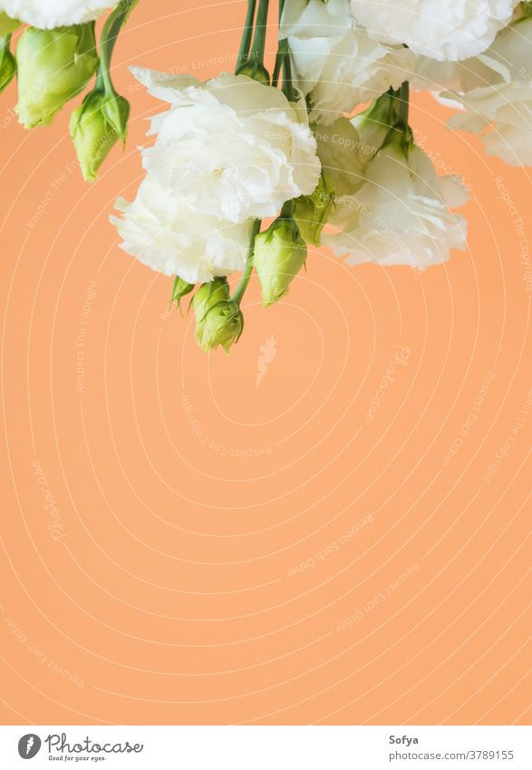 Beautiful eustoma flowers bouquet on orange lisianthus wedding design fashion mother minimal floral trendy background cantaloupe woman abstract love summer
