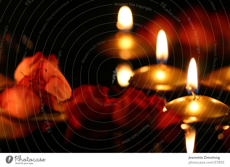 Warmth Orange Gold Rose Candle Physics Things