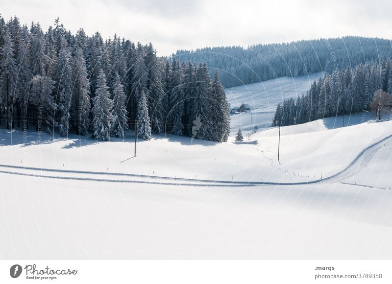 Winter landscape with cross country ski trail Snow Winter sports cross-country skiing Cross-country ski trail Coniferous trees Vantage point Hill Sky Landscape