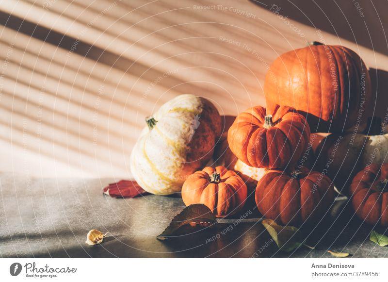 Pumpkins with strong shadows happy thanksgiving rustic fall pumpkin pile squash holiday leaf vegetable autumn decoration orange card season light font food