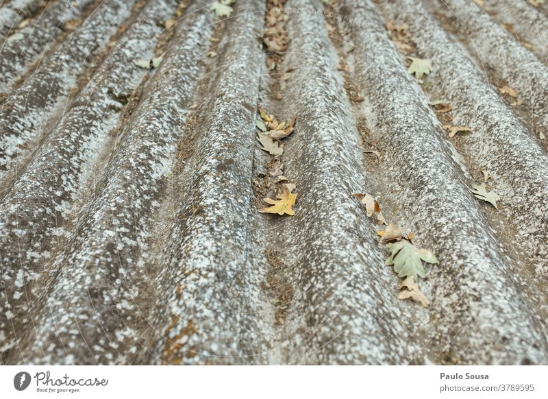 Dirty roofing tile with leaves Autumn Autumnal Autumn leaves fall Roof Roofing tile Clean Cleaning Copy Space top Day Deserted Exterior shot Early fall Leaf