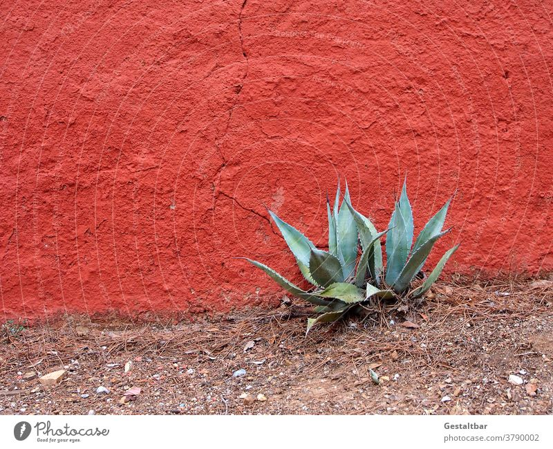 Agave in front of vermilion wall Wall (building) Red Plant Mediterranean Sparse