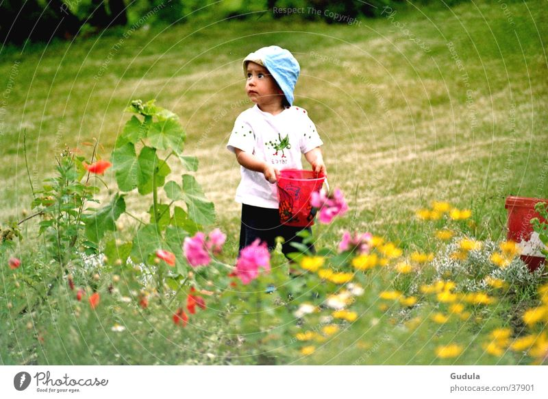 Child Man Flower Green Summer Boy (child) Meadow Dream Warmth Physics