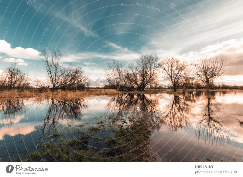 The meadows are upside down in the reflection of the rainwater Reflection Sky Clouds Inundated flooded field Tree Water Landscape Colour photo Deluge Rain Day