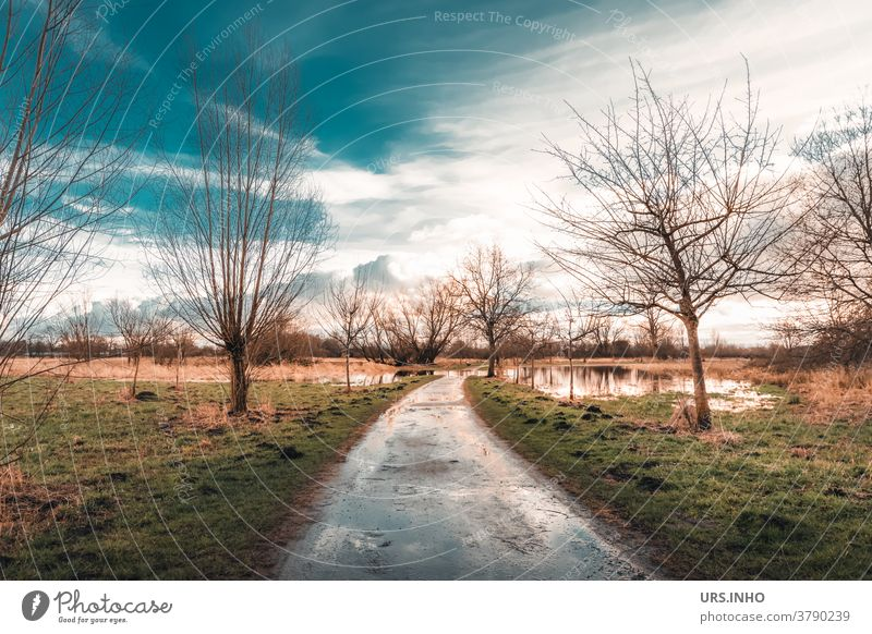 Way through the flooded meadow reflection Reflection Sky Clouds Inundated flooded field Tree Water Landscape Colour photo Deluge Rain Day Weather Flood Deserted