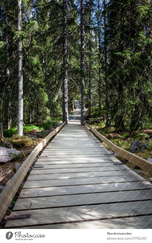 Developed hiking trail in Fulufjell Nationslpark in Sweden path Footbridge fulufjell fulufjället Dalarna Woodway Disability friendly Forest National Park travel
