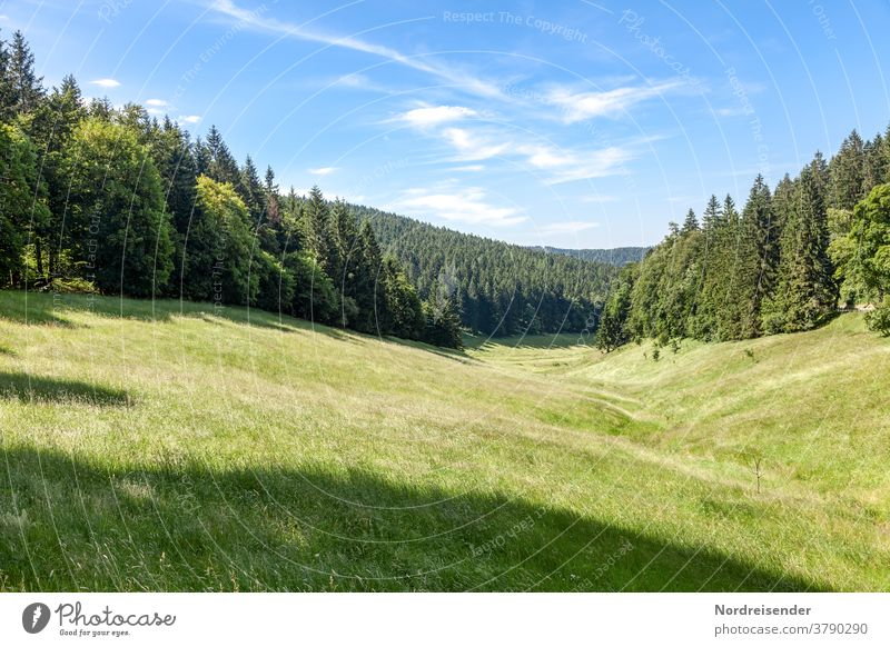 Summer meadow in the Thuringian Forest Landscape Nature Sky Spring Meadow Grass Beautiful weather Positive pretty Esthetic Colour photo Exterior shot Deserted