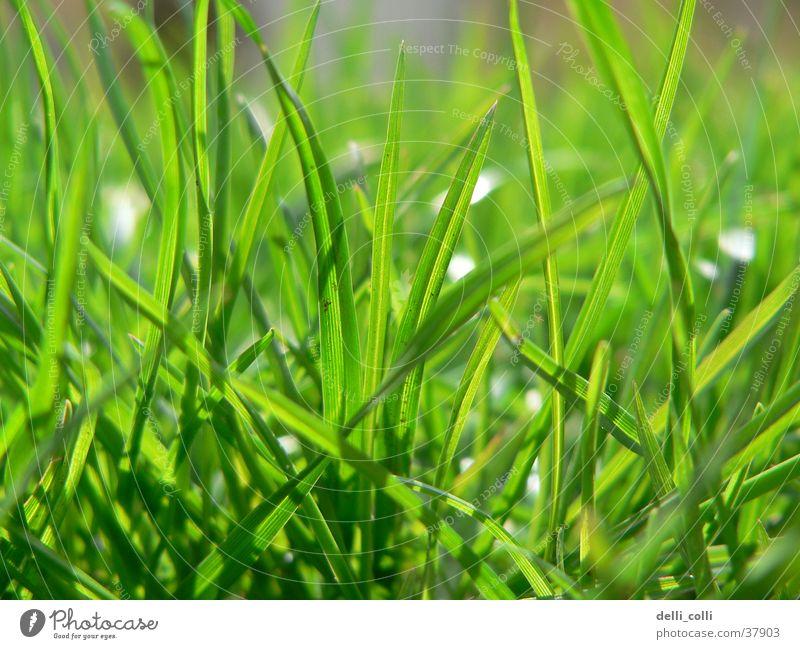Sun Green Meadow Grass Spring Lawn Grass green
