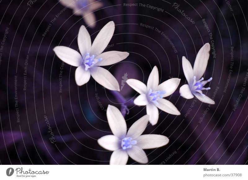 flower magic Blossom Flower Plant White Bushes Leaf