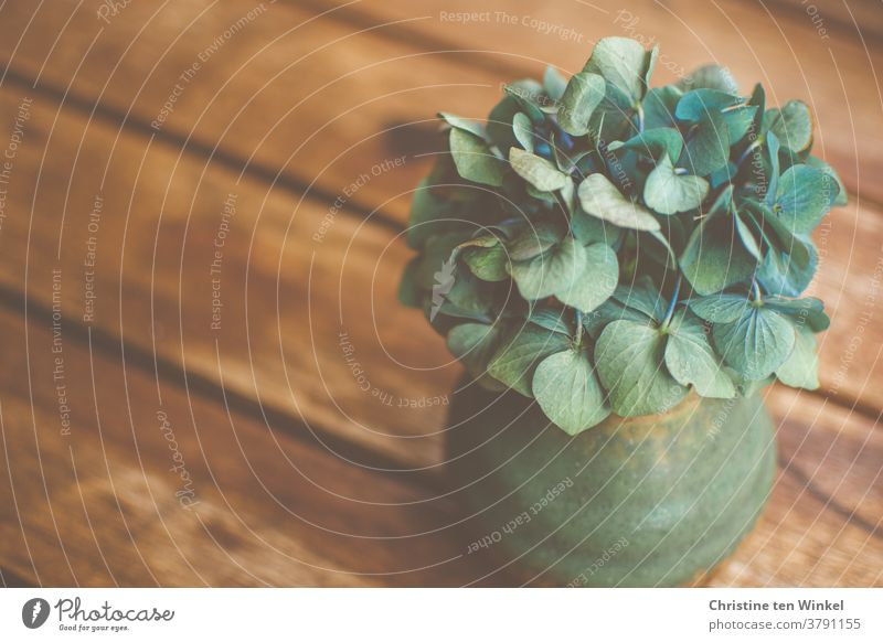 A small green vase with an almost faded blue hydrangea flower stands on a brown wooden table Vase Still Life Hydrangea blossom Blossom Faded Wooden table