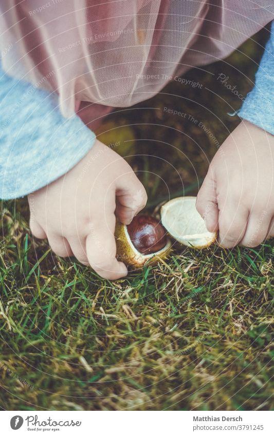 Girl collecting chestnuts Chestnut Chestnut tree hands children's hands amass Autumn Sense of Autumn Autumnal landscape
