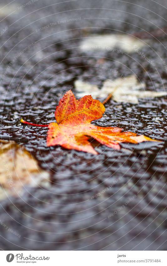 autumn weather Rain Weather Autumn Rainy weather Wet Street Asphalt Bad weather Water Puddle Reflection Exterior shot Deserted Lanes & trails Damp Leaf foliage
