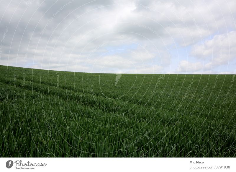 agriculture Field Green Grain Nature Sky Agriculture Cornfield Grain field Agricultural crop Food Growth wide Nutrition Plant Environment Ecological Landscape