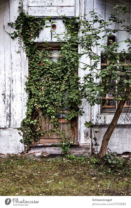 An overgrown door Entrance Front door Green Foliage plant Feral enchanted forsake sb./sth. Abandoned house Nature Conquer reconquer wax obstructed