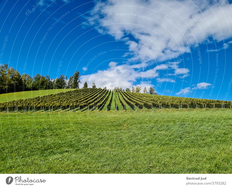 Autumnal vineyard in Styria Landscape Hiking Federal State of Styria Austria Exterior shot Colour photo Deserted Nature Day Beautiful weather
