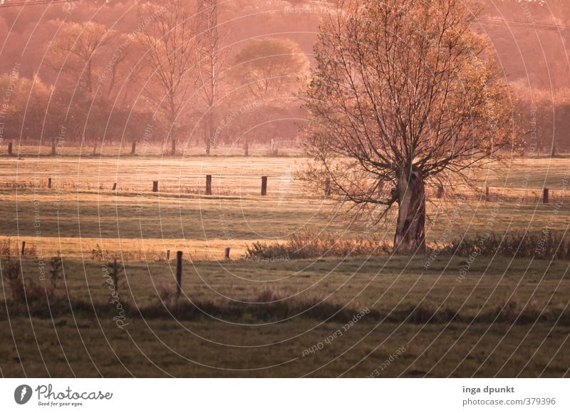 Nature Plant Tree Landscape Winter Environment Meadow Grass Spring Natural Germany Beautiful weather Culture Agriculture Seasons Pasture
