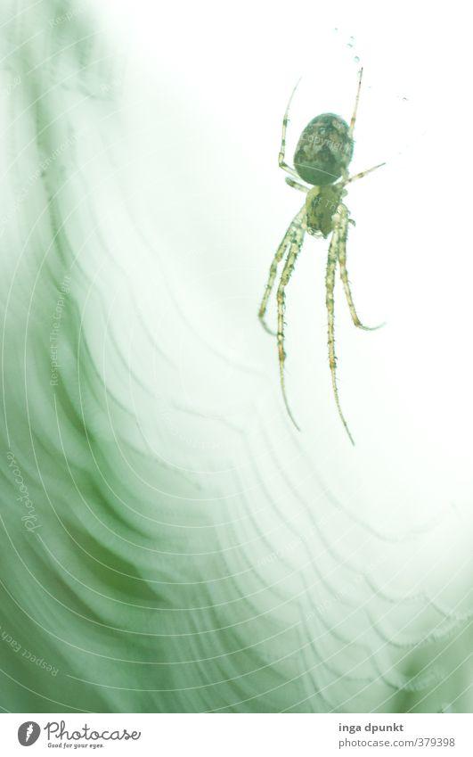 Nature Animal Environment Autumn Fear Wild animal Wait Network Creepy Catch Environmental protection Spider Spider's web Eerie Surveillance