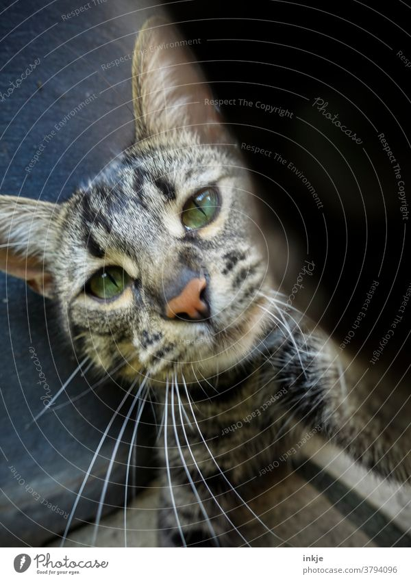 cross-eyed cat Colour photo Cat kitten cat face animal portrait Close-up Squint Playing inquisitorial Cute Pet Domestic cat Looking Love of animals Whisker