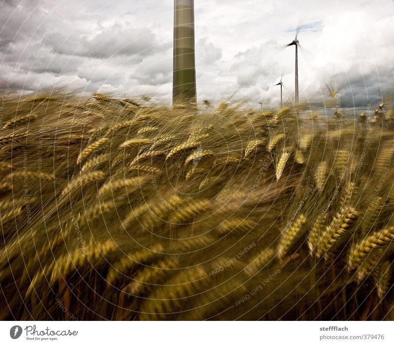 The wind, the wind ... Grain Wind energy plant Clouds Summer Gale Agricultural crop Field Threat Dark Large Blue Brown Gray Movement Energy Climate