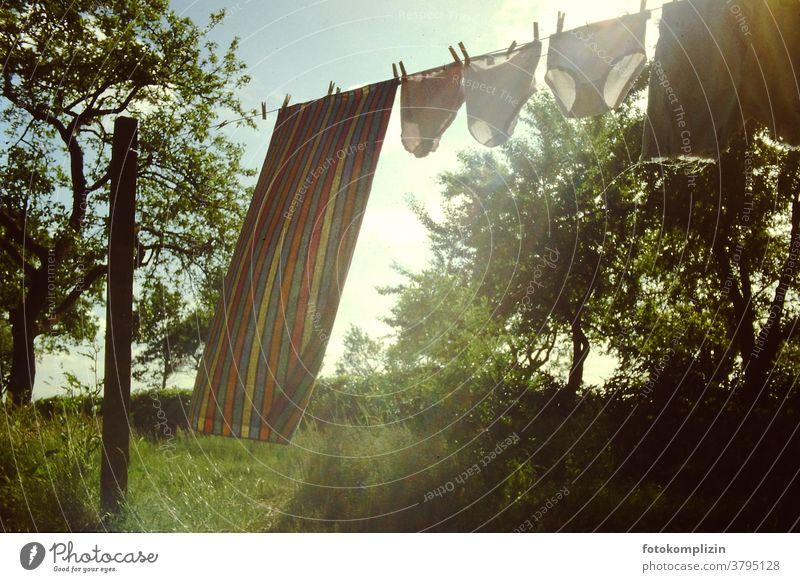 Wäscheleine mit drei Unterhosen und einem Handtuch auf einer wilden zugewachsenen Wiese mit Bäumen Clothesline Laundry Housekeeping Household Dry Hang up