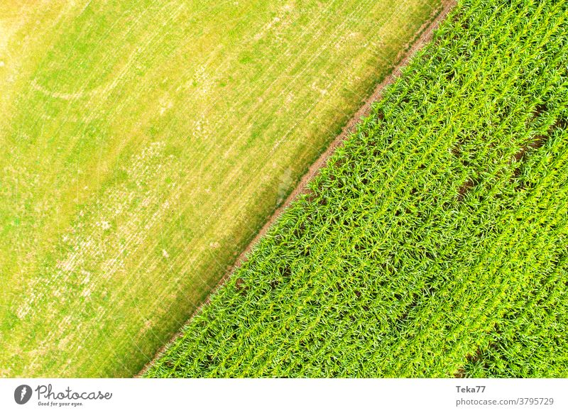 a corn field and a meadow from above farming farming ground green grass nature sunny