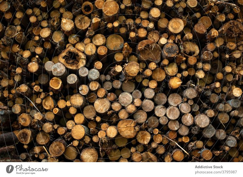 Stack of logs in forest in daytime tree trunk nature wood pile firewood abstract background natural organic branch cut woods woodland environment botany park