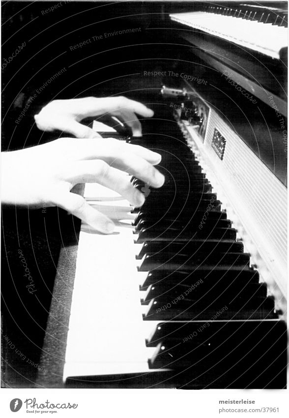Fender Rhodes 01 Piano E-piano Hand Make music Leisure and hobbies Music Keyboard Touch Musical instrument Black & white photo
