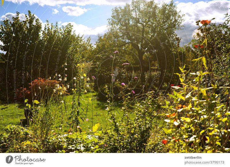 Late summer in the garden Branch Tree Flower blossom Blossom Relaxation holidays Garden Grass Autumn Sky allotment Garden allotments Deserted Nature Plant Lawn