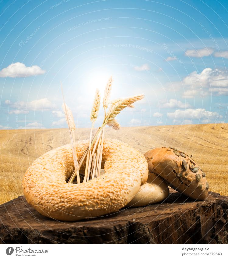 Bread and wheat cereal crops Roll Beautiful Life Art Nature Landscape Plant Sky Brown Yellow Gold Black Tradition Wheat Blue sky Cereal Bakery Rural Organic