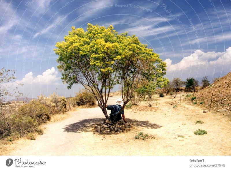 Siesta under the tree Tree Break Clouds Bushes Drought Monte Alban Summer man with hat Hat Shadow cirrostratus clouds Sky Lanes & trails Desert Mexico Oaxaca