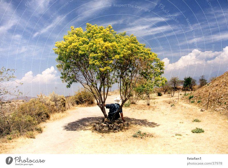 Sky Tree Summer Clouds Lanes & trails Break Bushes Desert Hat Mexico Drought Siesta Oaxaca Monte Alban