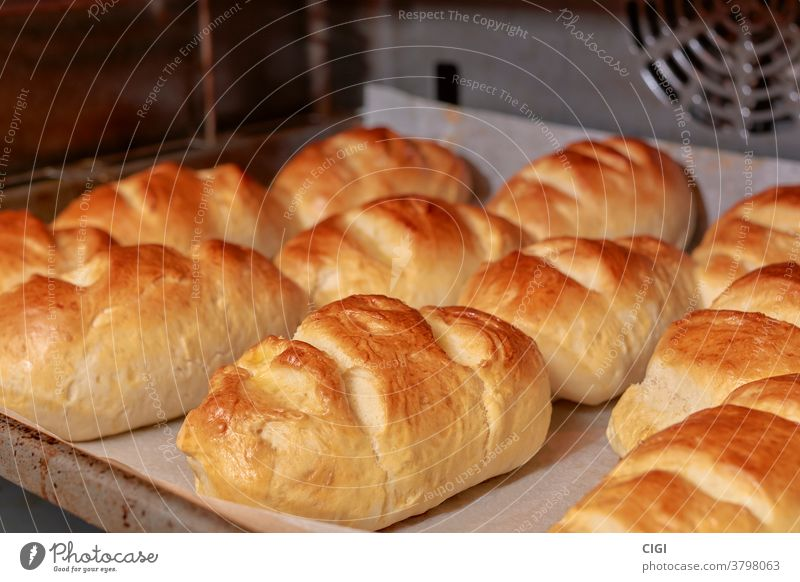 Bread of Milk being baked on a baking tray in the traditional style bread food milk bakery healthy breakfast wheat loaf bun pastry background white organic