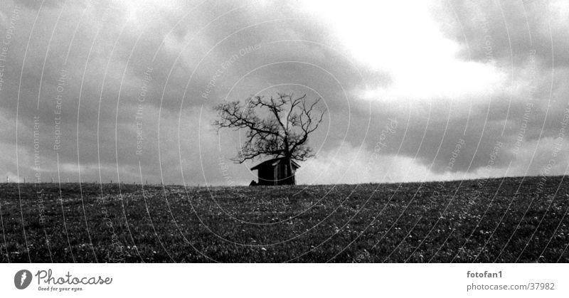 Lonely hut Barn Allgäu Raincloud Hut cabin clouds rain landscape tree