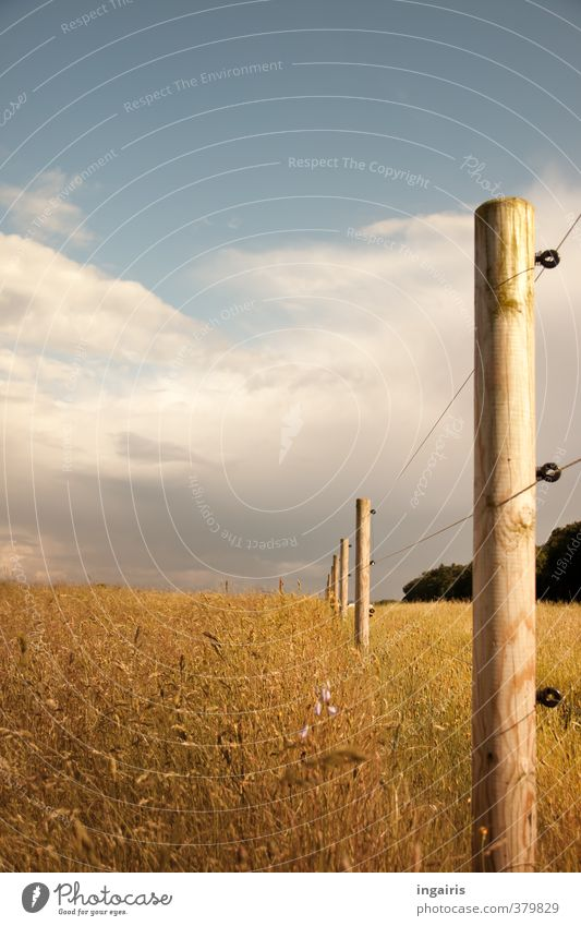 Boundless? Nature Landscape Plant Earth Air Sky Clouds Storm clouds Summer Weather Grass Meadow Field Fence post Pasture Wire Wire fence Wood Metal Illuminate