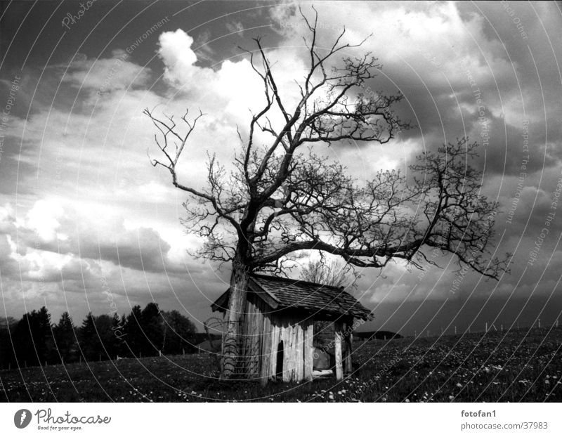Hut under the clouds Barn Tree Clouds Allgäu Death Contrast cabin heaven field grass flowers forest