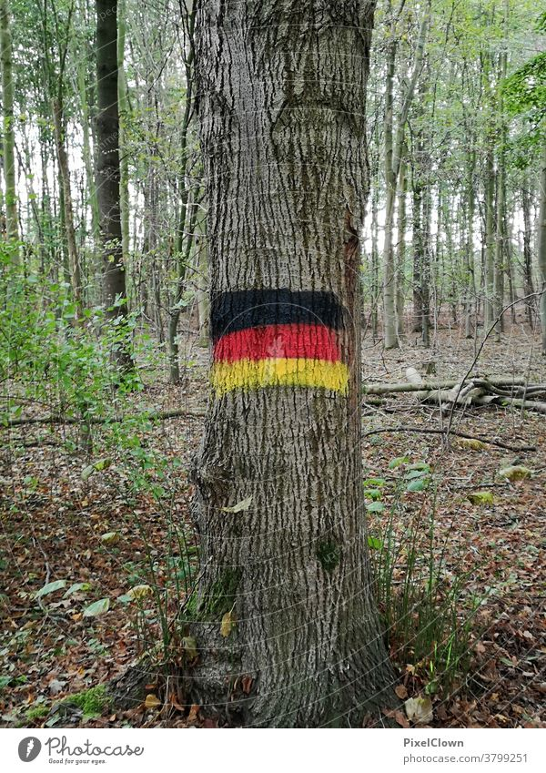 German Forest Tree Tree trunk Autumn Nature Exterior shot Deserted Landscape Germany, flag, forest clearing, foliage