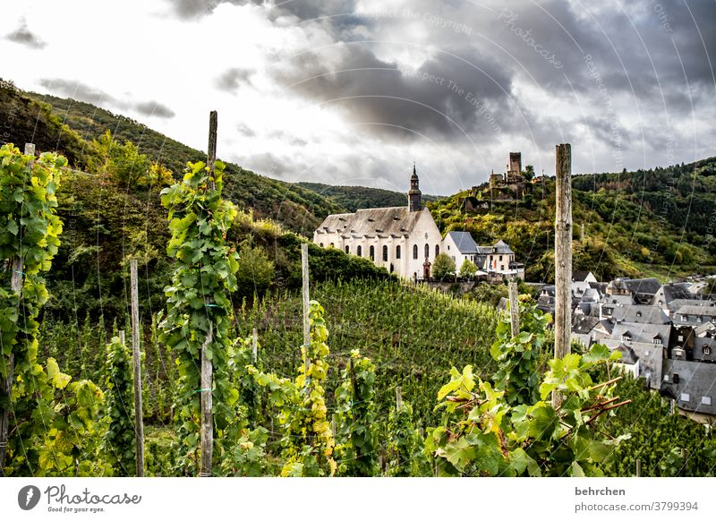 monastery wine Hunsrück Moselle valley Sunlight Mosel (wine-growing area) River bank Lanes & trails Idyll tranquillity Wine growing Rhineland-Palatinate vine