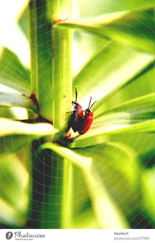 inflagranti #2 Red Green Leaf Stalk Propagation Insect Beetle depth blur