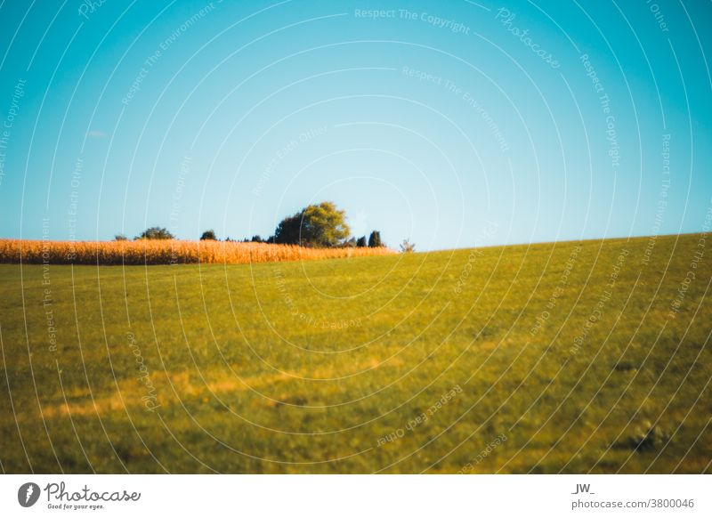 Autumn meadow with sunshine Meadow Sky Grass Nature Exterior shot Green Field Landscape Deserted Beautiful weather Copy Space top