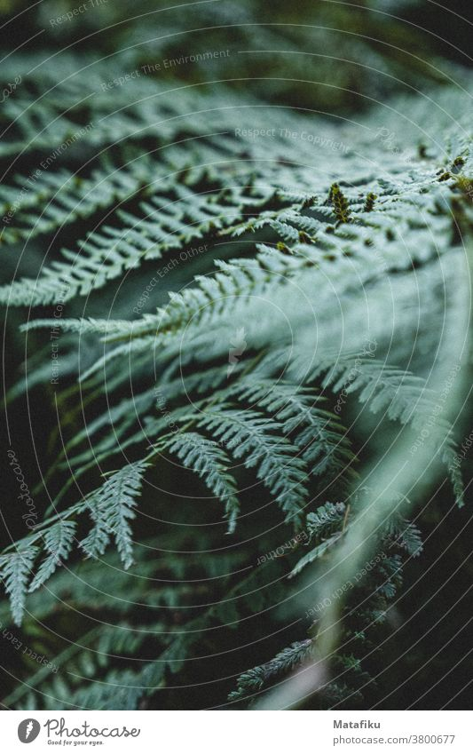 fern leaf Fern Leaf flora Plant Forest Nature Close-up blurriness Green Foliage plant Wild plant Deserted in the wood mood Shallow depth of field Environment
