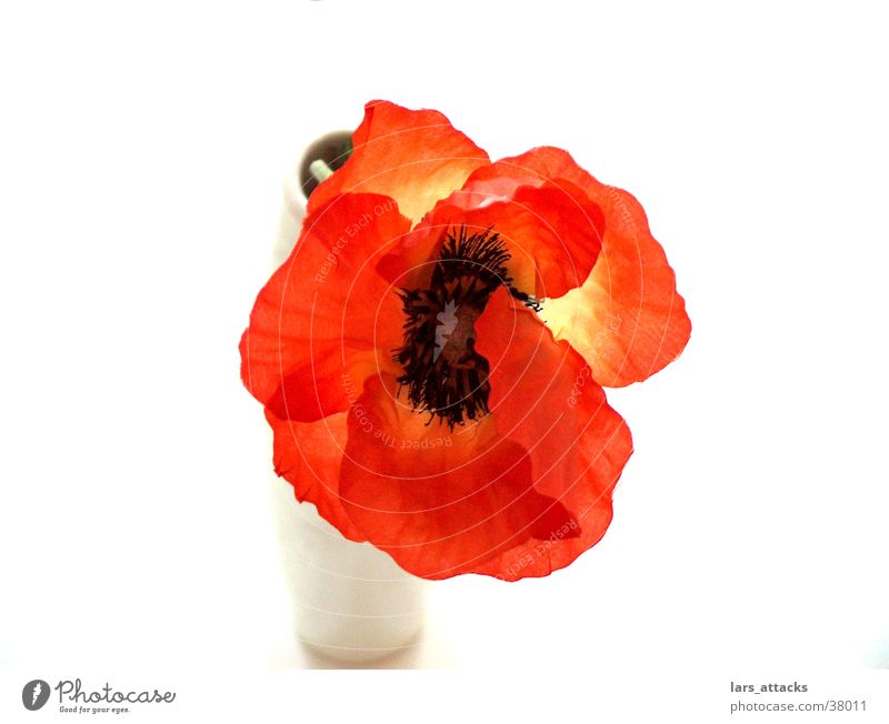 Flower Style Orange Poppy Vase Placed