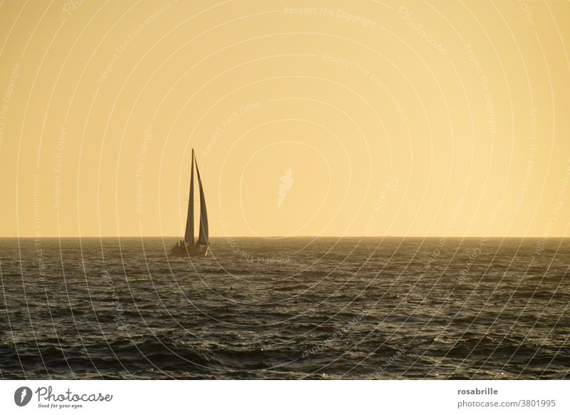 far away | sailboat in the evening light Sailboat Sailing Freedom Far-off places Ocean vacation free time holidays Relaxation Evening Dusk Orange wide endless