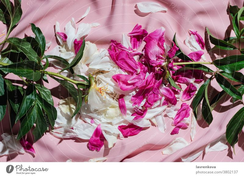Flatlay of withered peonies on pink drapery flower aromatic relaxation retreat peace rose calm peaceful petals peony summer spring seasonal wilting minimal
