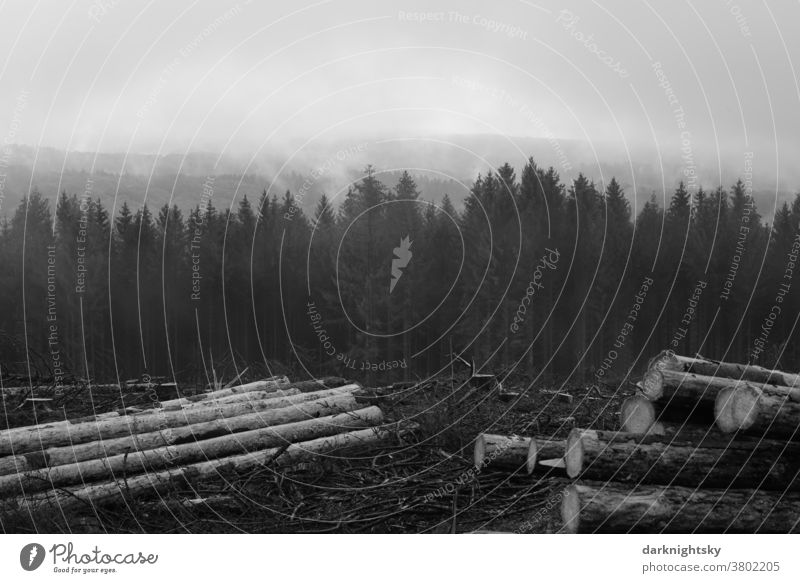 Forestry in a low mountain range in South Westphalia after damage by bark beetles forest Exterior shot Tree Nature Deserted Environment Tree trunk Logging