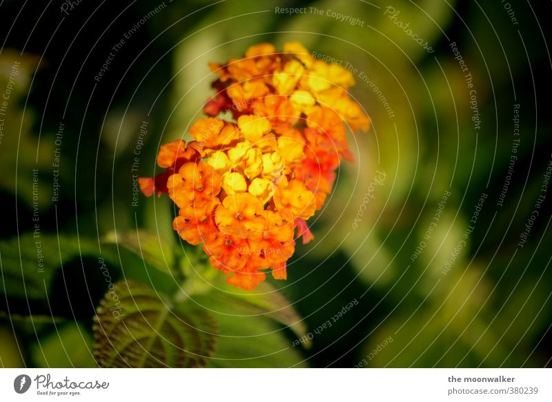 Nature Green Beautiful Plant Red Flower Leaf Yellow Blossom Garden Orange Warm-heartedness Foliage plant