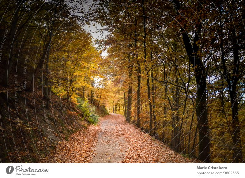 Beautiful colors of autumn in the forest Autumn colors Autumn mood Fall Season no people cinematic look cinematic mood the way forward ethereal dreamy