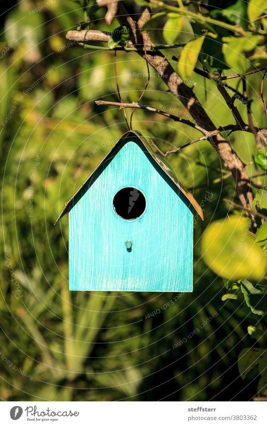 Aqua blue metal birdhouse hangs from a lemon tree Bird house blue bird house blue birdhouse aqua colorful tropical nature shelter wildlife wild bird nesting