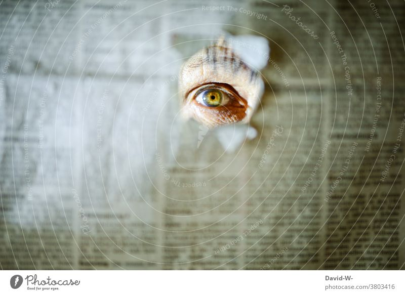 Perspective - I see you Eyes espionage Vista Observe Peephole Newspaper Reader Reading bootlicker Media Journalism Hollow